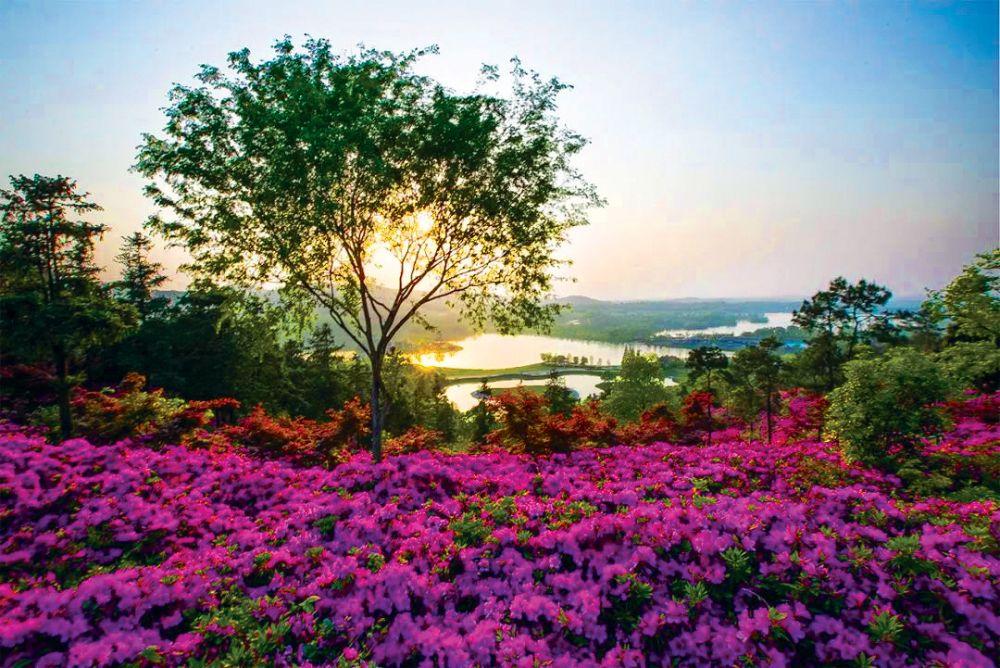 hk_c_3.南京銀杏湖樂園春意盎然。 圖片來源:南京銀杏湖樂園.jpg